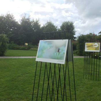 expositie Mascha