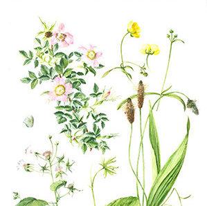 Workshop botanisch tekenen door Kunstacademie Friesland